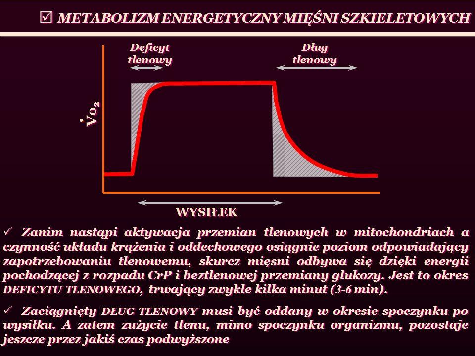 METABOLIZM ENERGETYCZNY MIĘŚNI SZKIELETOWYCH Vo 2 WYSIŁEK Deficyt tlenowy Dług tlenowy Zanim nastąpi aktywacja przemian tlenowych w mitochondriach a c