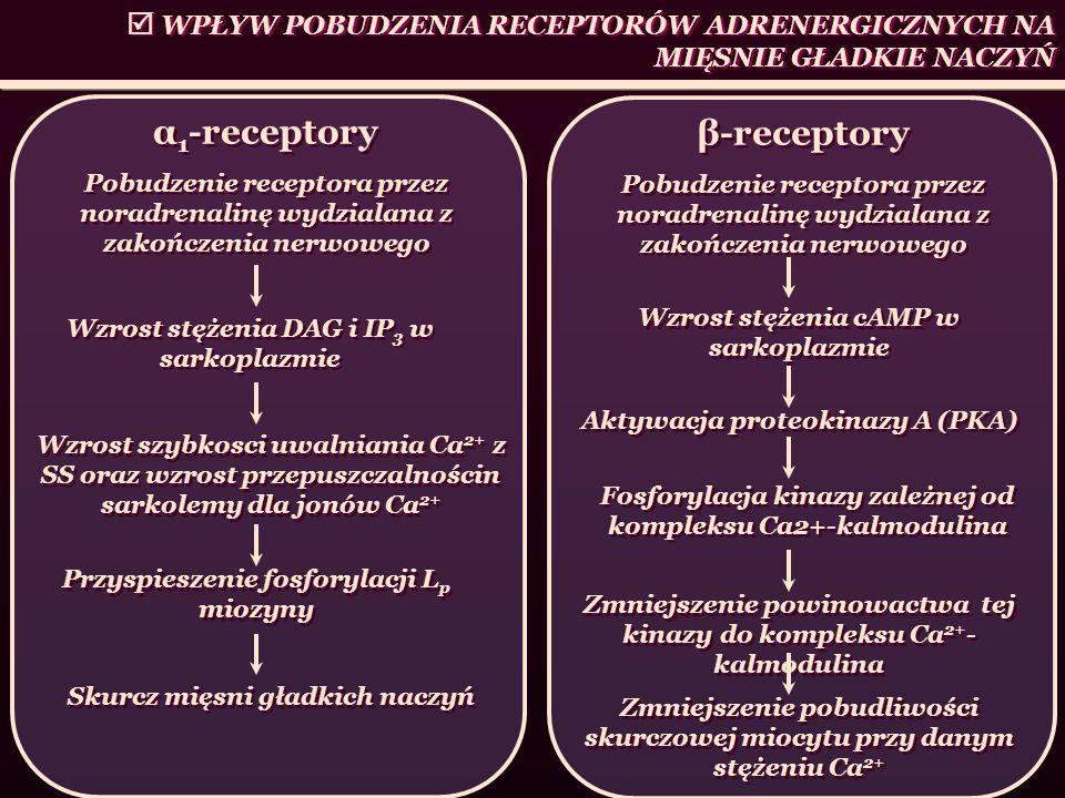 WPŁYW POBUDZENIA RECEPTORÓW ADRENERGICZNYCH NA MIĘSNIE GŁADKIE NACZYŃ β-receptory Pobudzenie receptora przez noradrenalinę wydzialana z zakończenia ne