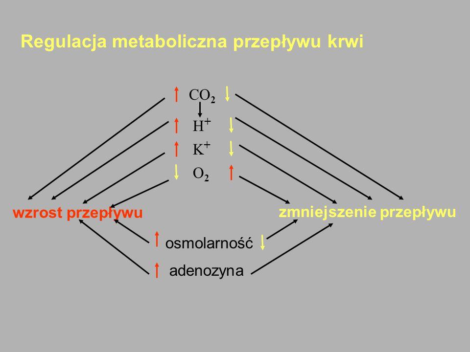 Regulacja metaboliczna przepływu krwi CO 2 H + K + O 2 wzrost przepływu zmniejszenie przepływu osmolarność adenozyna