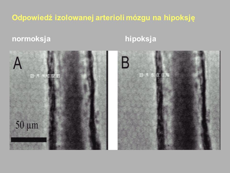 Odpowiedź izolowanej arterioli mózgu na hipoksję normoksjahipoksja