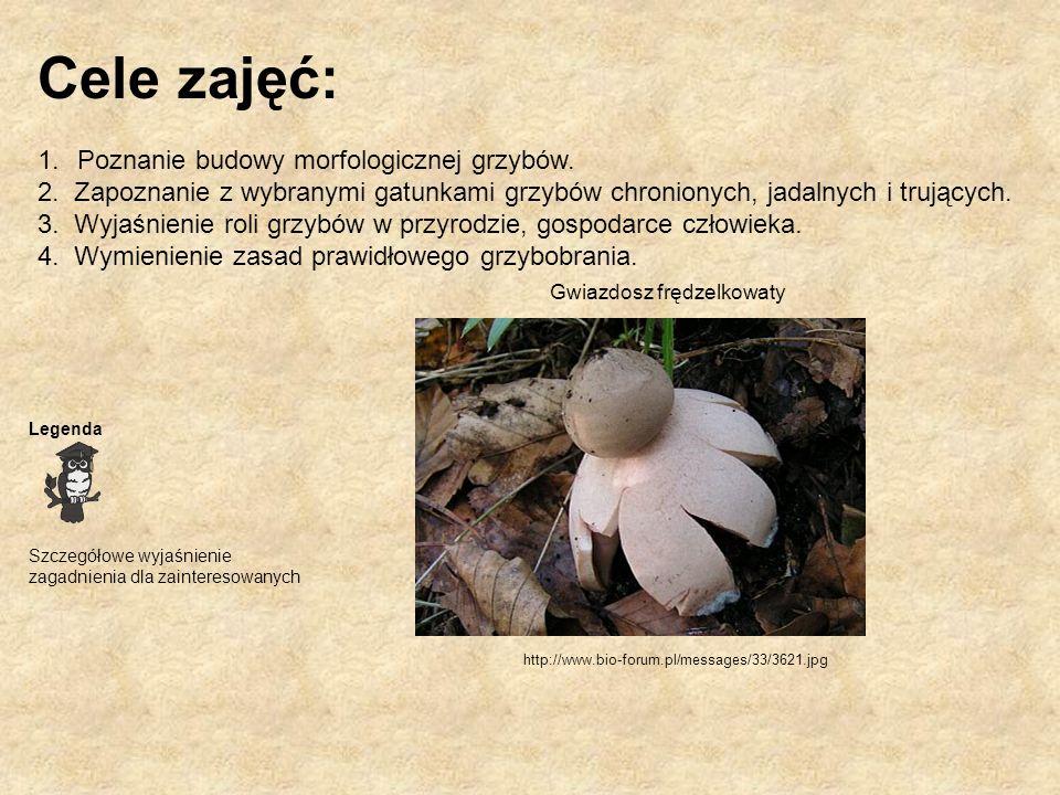 Cele zajęć: 1.Poznanie budowy morfologicznej grzybów. 2. Zapoznanie z wybranymi gatunkami grzybów chronionych, jadalnych i trujących. 3. Wyjaśnienie r