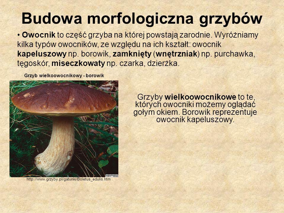 Owocnik to część grzyba na której powstają zarodnie. Wyróżniamy kilka typów owocników, ze względu na ich kształt: owocnik kapeluszowy np. borowik, zam
