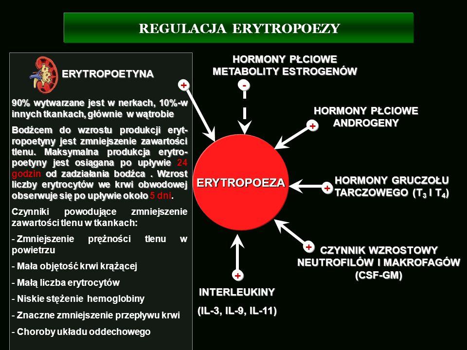 REGULACJA ERYTROPOEZY INTERLEUKINY (IL-3, IL-9, IL-11) ERYTROPOETYNA CZYNNIK WZROSTOWY NEUTROFILÓW I MAKROFAGÓW (CSF-GM) HORMONY GRUCZOŁU TARCZOWEGO (