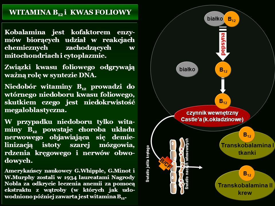 Kobalamina jest kofaktorem enzy- mów biorących udział w reakcjach chemicznych zachodzących w mitochondriach i cytoplazmie. Związki kwasu foliowego odg