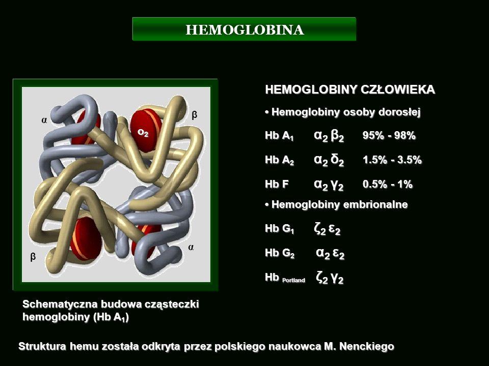 HEMOGLOBINA Schematyczna budowa cząsteczki hemoglobiny (Hb A 1 ) α β α β o2o2o2o2 HEMOGLOBINY CZŁOWIEKA Hemoglobiny osoby dorosłej Hemoglobiny osoby d