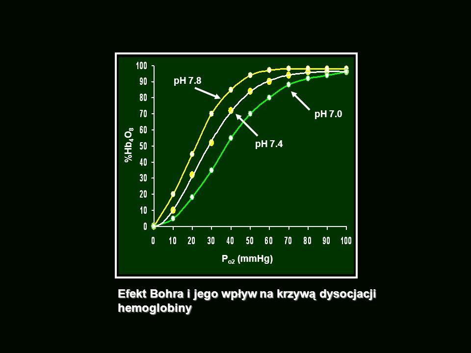 Efekt Bohra i jego wpływ na krzywą dysocjacji hemoglobiny P o2 (mmHg) %Hb 4 O 8 pH 7.0 pH 7.4 pH 7.8