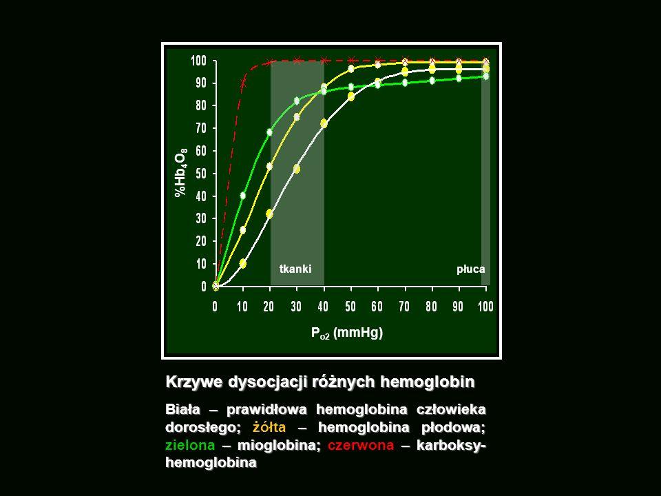 Krzywe dysocjacji różnych hemoglobin Biała – prawidłowa hemoglobina człowieka dorosłego; – hemoglobina płodowa; – mioglobina; – karboksy- hemoglobina