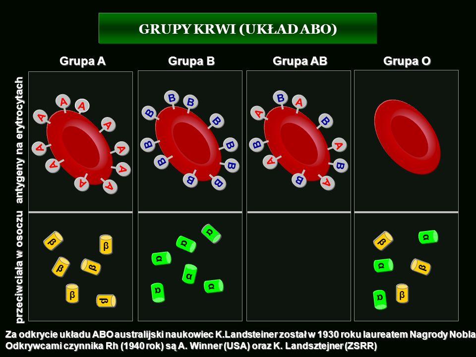 A A A A A B B B B B β β β β β β α α α α α α β β β α α α GRUPY KRWI (UKŁAD ABO) antygeny na erytrocytach przeciwciała w osoczu Grupa A Grupa B Grupa AB