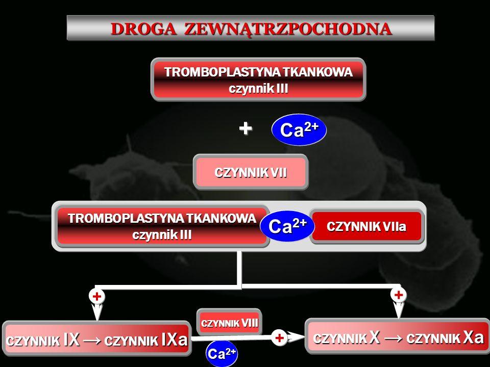 DROGA ZEWNĄTRZPOCHODNA TROMBOPLASTYNA TKANKOWA czynnik III + Ca 2+ CZYNNIK VII TROMBOPLASTYNA TKANKOWA czynnik III CZYNNIK VIIa Ca 2+ CZYNNIK IX CZYNN