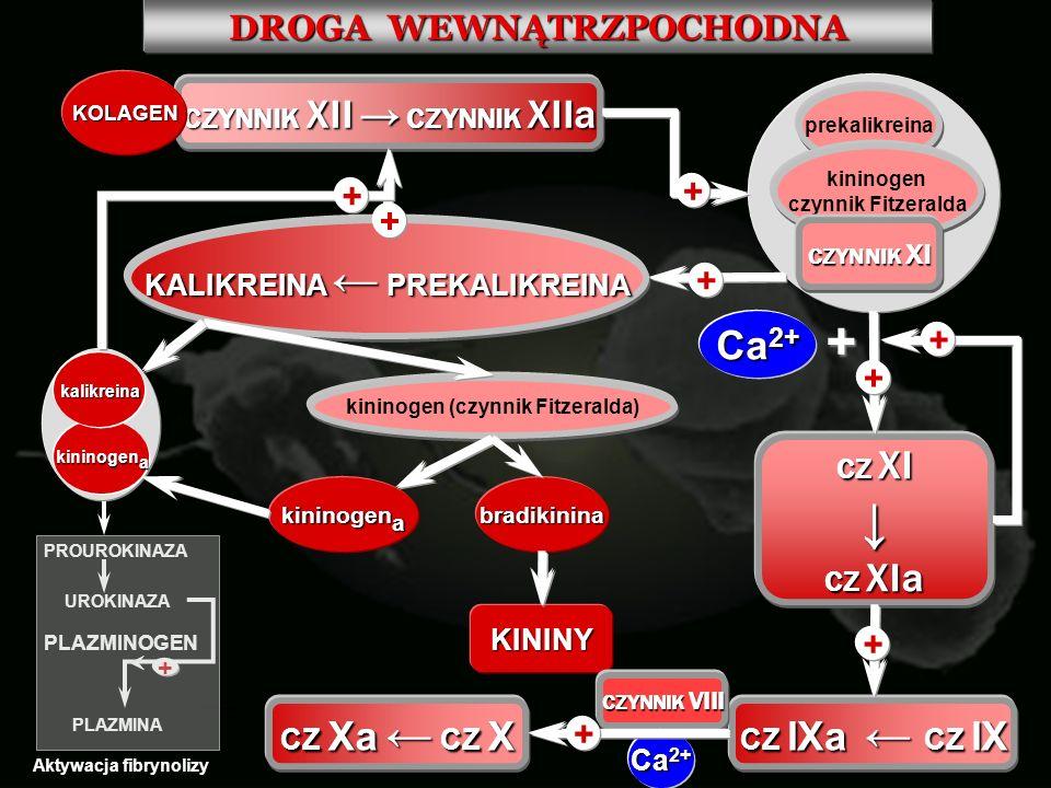DROGA WEWNĄTRZPOCHODNA CZYNNIK XII CZYNNIK XIIa KOLAGEN prekalikreina kininogen czynnik Fitzeralda CZYNNIK XI + CZ XI CZ XIa KALIKREINA PREKALIKREINA