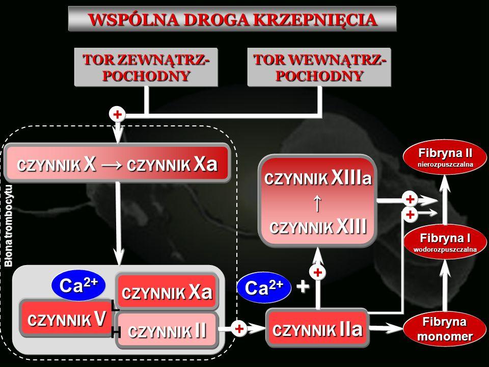 WSPÓLNA DROGA KRZEPNIĘCIA TOR ZEWNĄTRZ- POCHODNY TOR WEWNĄTRZ- POCHODNY CZYNNIK X CZYNNIK Xa + CZYNNIK V Ca 2+ CZYNNIK II CZYNNIK Xa L H CZYNNIK IIa +