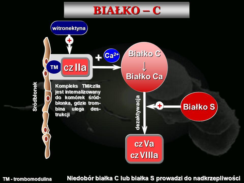 BIAŁKO – C Sródbłonek TM TM - trombomodulina CZ IIa witronektyna + Białko C Białko Ca + Ca 2+ CZ Va CZ VIIIa Białko S + dezaktywacja Niedobór białka C