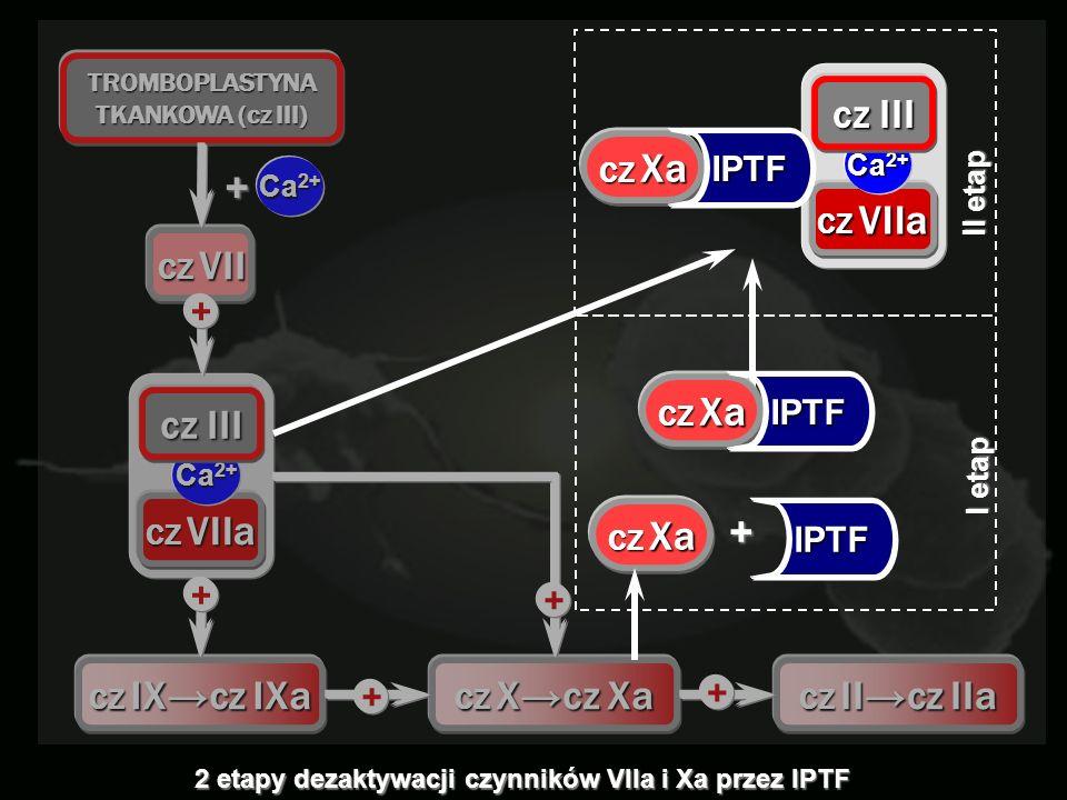 TROMBOPLASTYNA TKANKOWA (cz III) Ca 2+ CZ VII + CZ VIIa Ca 2+ cz III CZ IXcz IXa CZ Xcz Xa + + + + CZ IIcz IIa + CZ Xa IPTF + I etap CZ VIIa Ca 2+ cz