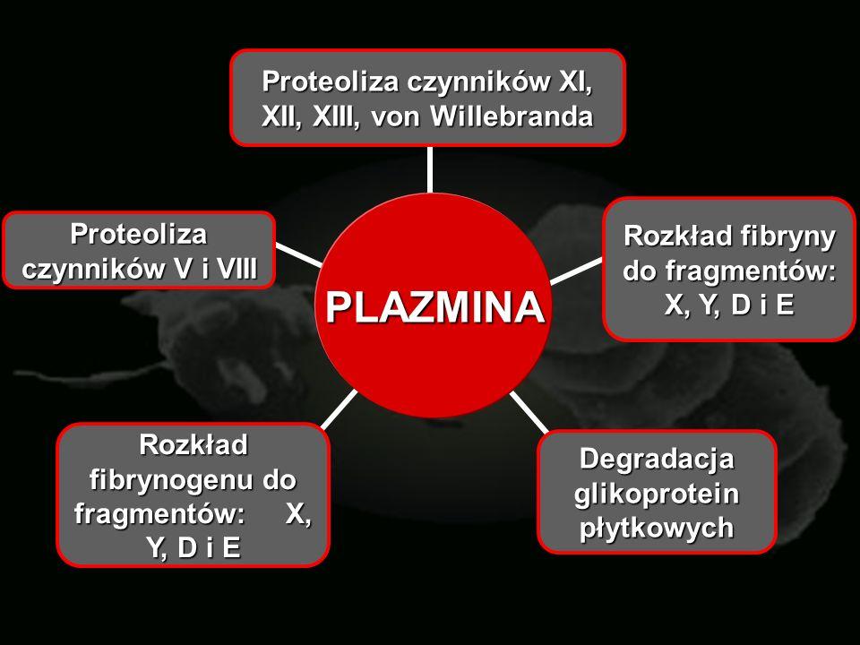 PLAZMINA Proteoliza czynników XI, XII, XIII, von Willebranda Rozkład fibryny do fragmentów: X, Y, D i E Degradacja glikoprotein płytkowych Rozkład fib