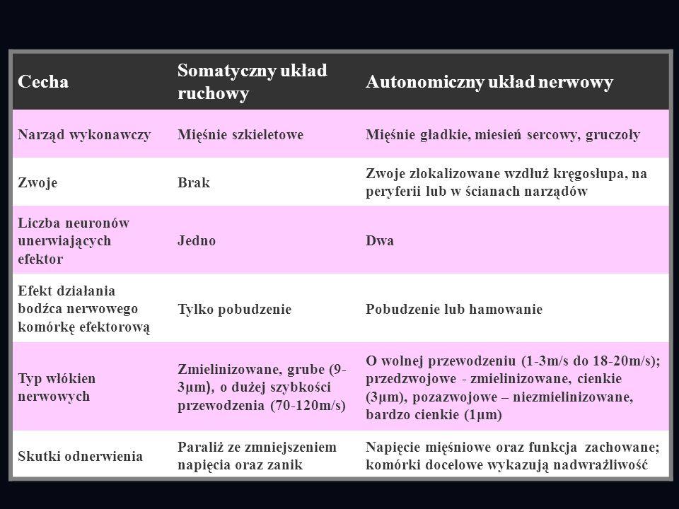 Cecha Somatyczny układ ruchowy Autonomiczny układ nerwowy Narząd wykonawczyMięśnie szkieletoweMięśnie gładkie, miesień sercowy, gruczoły ZwojeBrak Zwo