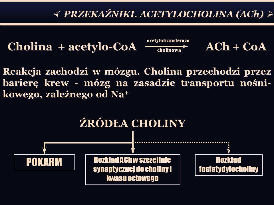 PRZEKAŹNIKI. ACETYLOCHOLINA (ACh) Cholina + acetylo-CoA ACh + CoA Reakcja zachodzi w mózgu. Cholina przechodzi przez barierę krew - mózg na zasadzie t