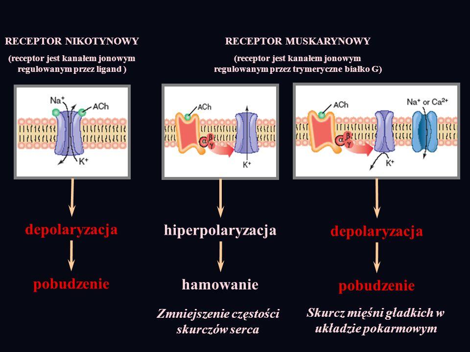 RECEPTOR NIKOTYNOWY (receptor jest kanałem jonowym regulowanym przez ligand ) RECEPTOR MUSKARYNOWY (receptor jest kanałem jonowym regulowanym przez tr