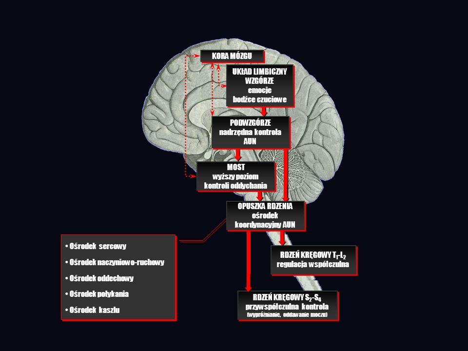 KORA MÓZGU RDZEŃ KRĘGOWY T 1 -L 2 regulacja współczulna RDZEŃ KRĘGOWY T 1 -L 2 regulacja współczulna RDZEŃ KRĘGOWY S 2 -S 4 przywspółczulna kontrola (
