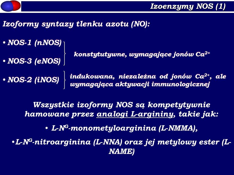 Izoenzymy NOS (1) Izoformy syntazy tlenku azotu (NO): NOS-1 (nNOS) NOS-3 (eNOS) NOS-2 (iNOS) Izoformy syntazy tlenku azotu (NO): NOS-1 (nNOS) NOS-3 (e