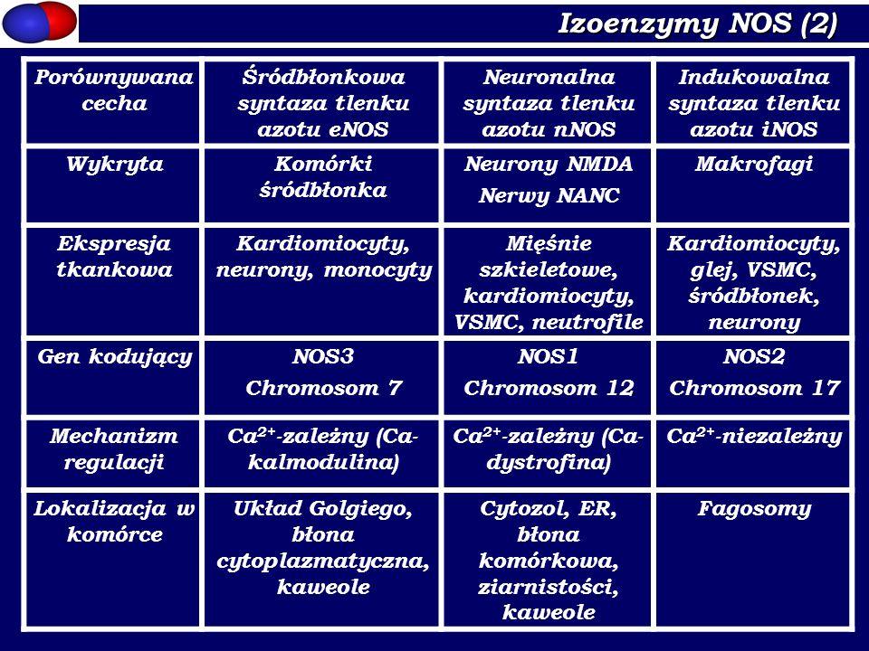 Izoenzymy NOS (2) Porównywana cecha Śródbłonkowa syntaza tlenku azotu eNOS Neuronalna syntaza tlenku azotu nNOS Indukowalna syntaza tlenku azotu iNOS