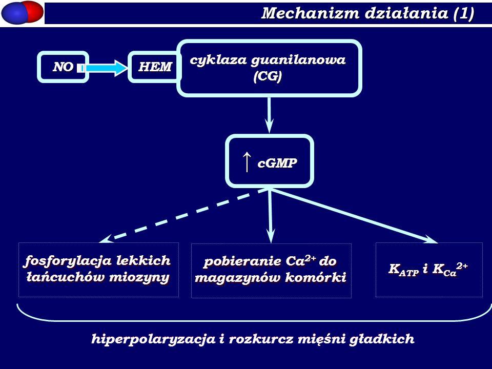Mechanizm działania (1) HEM cyklaza guanilanowa (CG) NO cGMP fosforylacja lekkich łańcuchów miozyny pobieranie Ca 2+ do magazynów komórki K ATP i K Ca