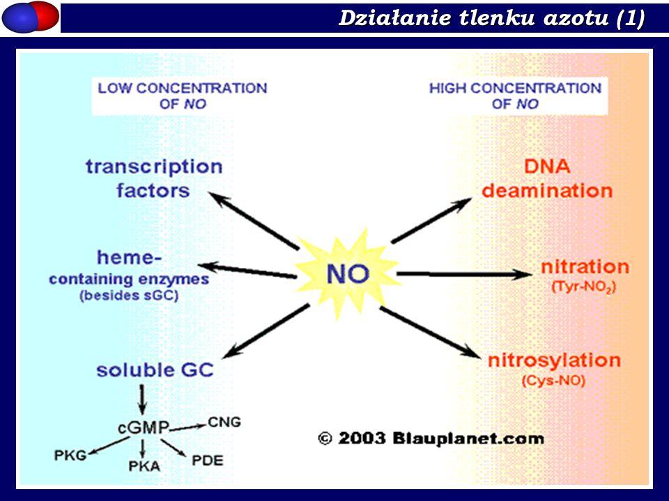 Działanie tlenku azotu (1)