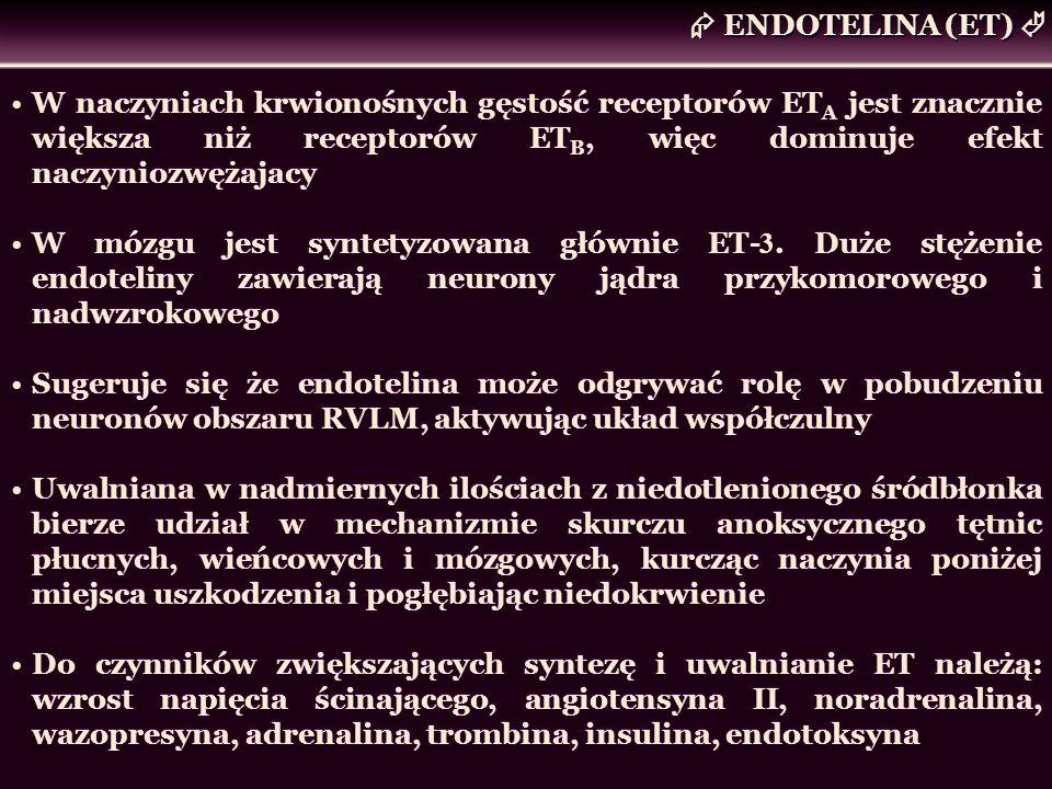 ENDOTELINA (ET) W naczyniach krwionośnych gęstość receptorów ET A jest znacznie większa niż receptorów ET B, więc dominuje efekt naczyniozwężajacy W m