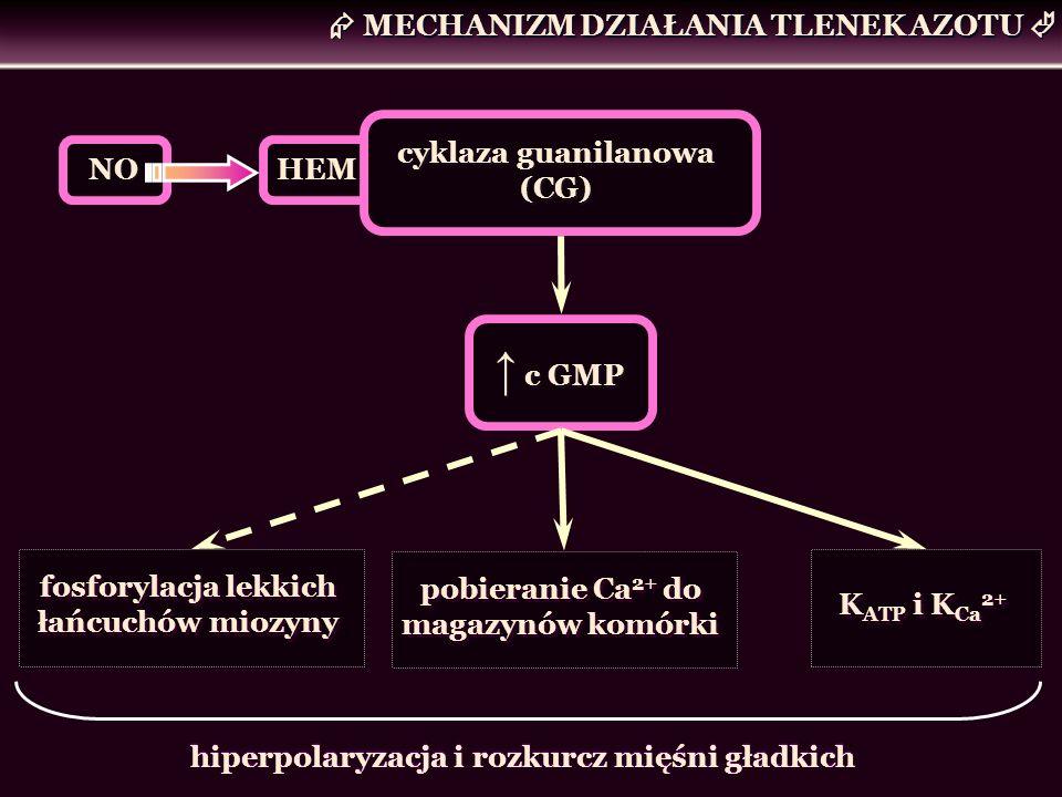 MECHANIZM DZIAŁANIA TLENEK AZOTU HEM cyklaza guanilanowa (CG) NO c GMP fosforylacja lekkich łańcuchów miozyny pobieranie Ca 2+ do magazynów komórki K