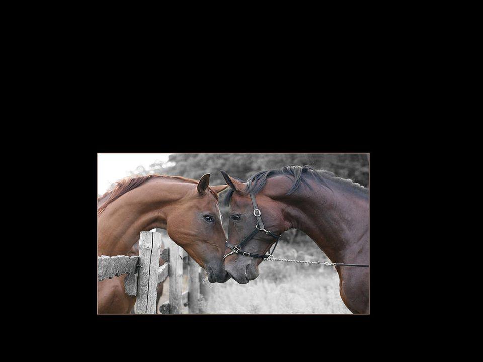 Oczywiście tą miłością jest miłość do koni…