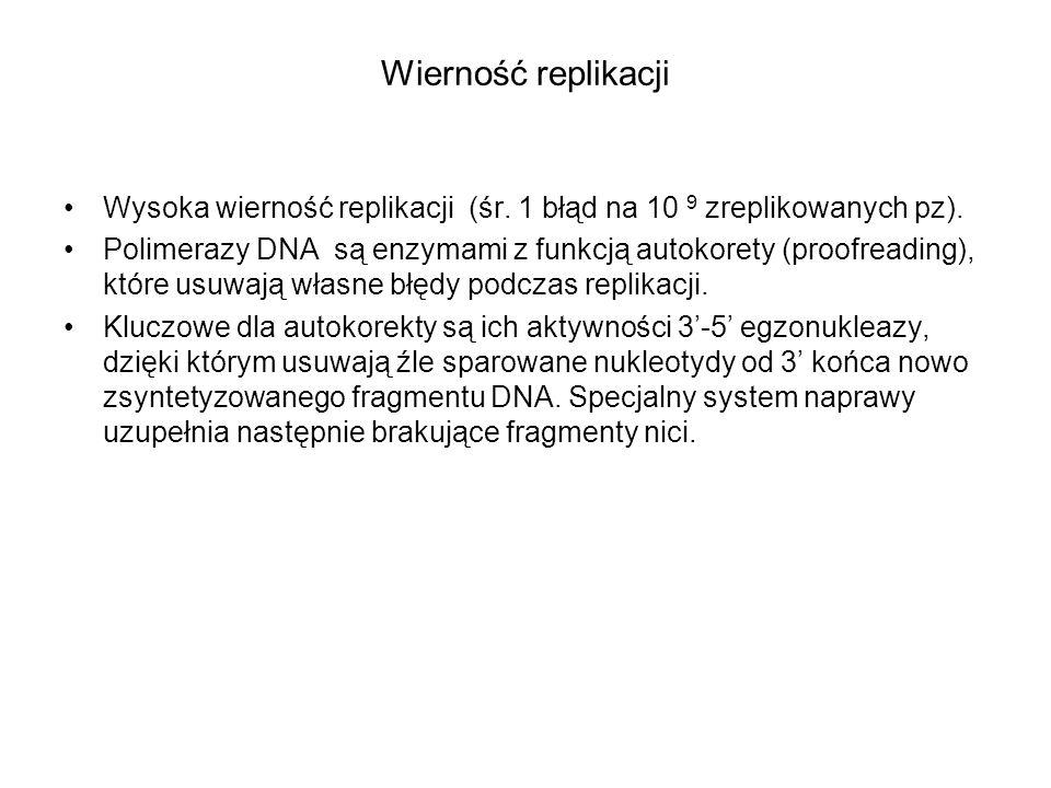 Wierność replikacji Wysoka wierność replikacji (śr. 1 błąd na 10 9 zreplikowanych pz). Polimerazy DNA są enzymami z funkcją autokorety (proofreading),