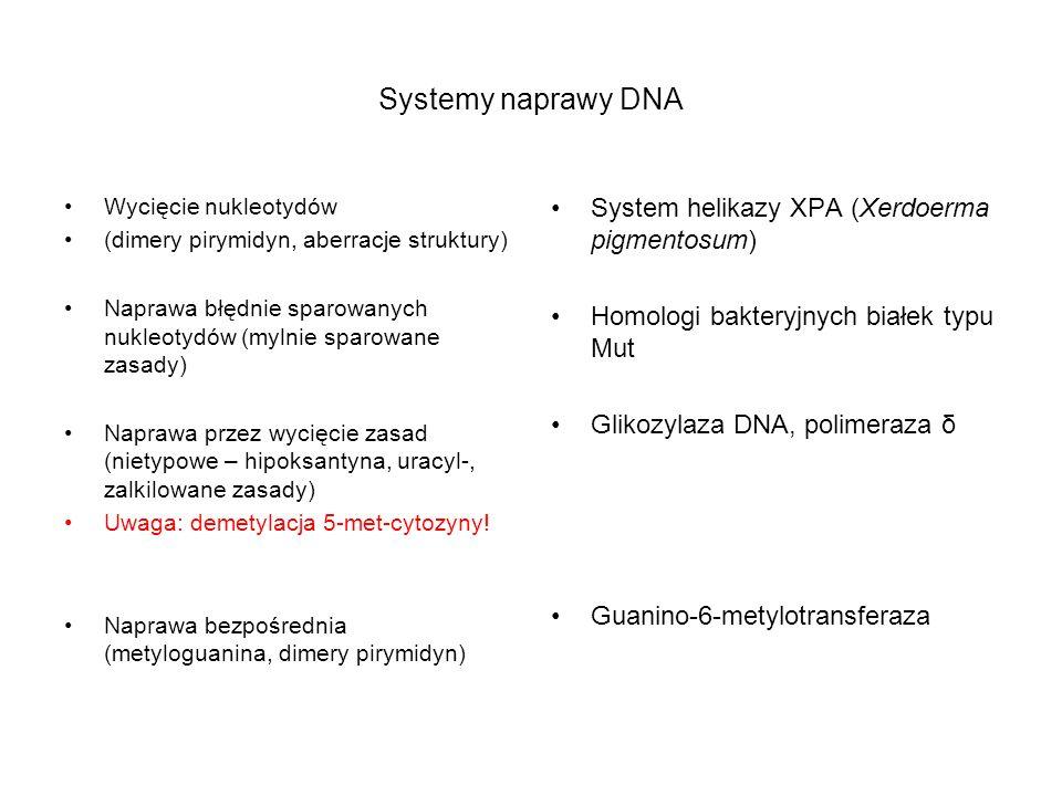 Systemy naprawy DNA Wycięcie nukleotydów (dimery pirymidyn, aberracje struktury) Naprawa błędnie sparowanych nukleotydów (mylnie sparowane zasady) Nap