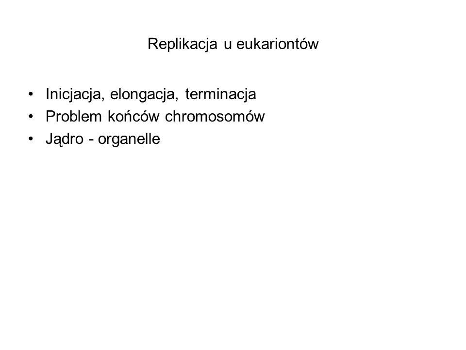 Replikacja u eukariontów Inicjacja, elongacja, terminacja Problem końców chromosomów Jądro - organelle