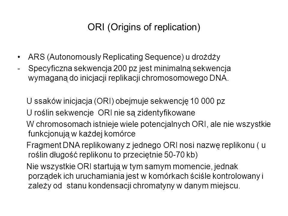 ORI (Origins of replication) ARS (Autonomously Replicating Sequence) u drożdży -Specyficzna sekwencja 200 pz jest minimalną sekwencja wymaganą do inic