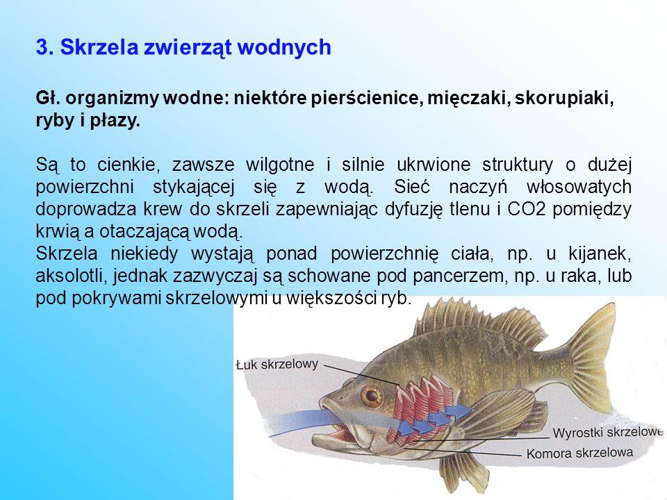 3. Skrzela zwierząt wodnych Gł. organizmy wodne: niektóre pierścienice, mięczaki, skorupiaki, ryby i płazy. Są to cienkie, zawsze wilgotne i silnie uk