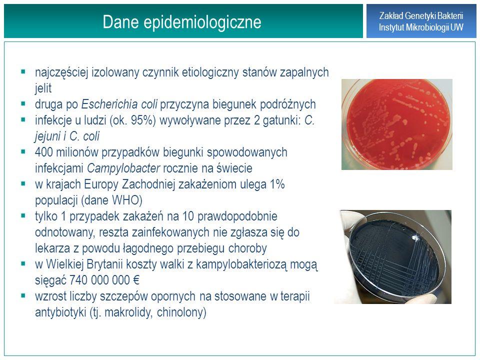 Zakład Genetyki Bakterii Instytut Mikrobiologii UW Źródła zakażeń pałeczkami Campylobacter najczęściej nieodpowiednio przygotowane mięso drobiowe 30% tusz mięsa drobiowego zainfekowanych Campylobacter – w różnych krajach UE od 0% do 82,8% (dane EFSA za 2007 r.) w jelicie ślepym zainfekowanych kurcząt stwierdza się do 10 10 CFU / g jedna kropla soku z zakażonego kurczka zawiera 10 6 CFU (dawka infekcyjna dla ludzi wynosi od 10 2 do 10 6 ).