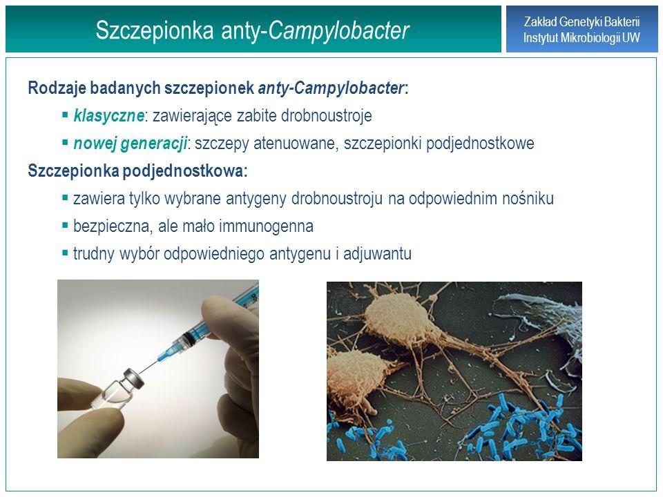 Zakład Genetyki Bakterii Instytut Mikrobiologii UW Szczepionka anty- Campylobacter Rodzaje badanych szczepionek anty-Campylobacter : klasyczne : zawie
