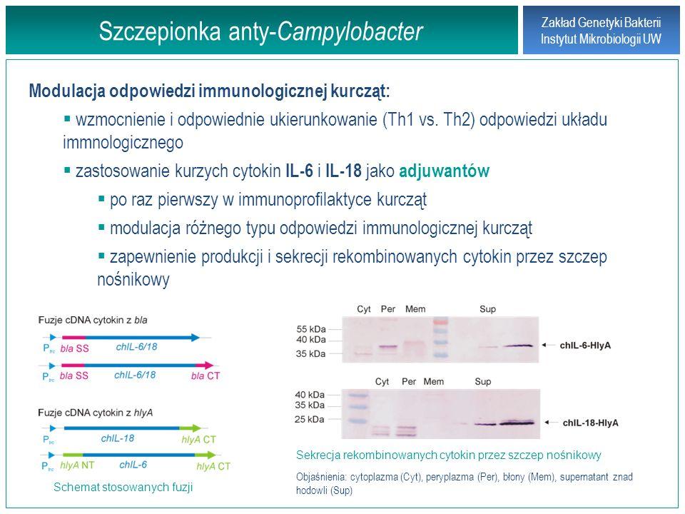 Założenia pracy doktorskiej Zakład Genetyki Bakterii Instytut Mikrobiologii UW Opracowanie strategii klonowania genów (cDNA) kodujących kurze cytokiny: chIL-6 i chIL-18 w komórkach awirulentnego szczepu Salmonella enterica sv.