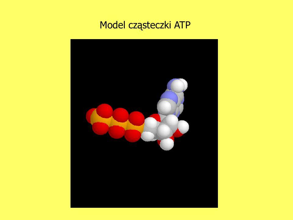 Model cząsteczki ATP