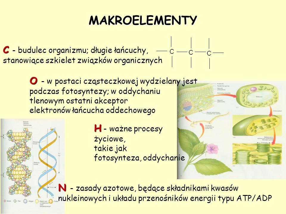 O O - w postaci cząsteczkowej wydzielany jest podczas fotosyntezy; w oddychaniu tlenowym ostatni akceptor elektronów łańcucha oddechowego MAKROELEMENT