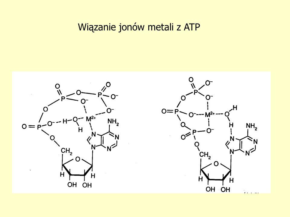 Wiązanie jonów metali z ATP