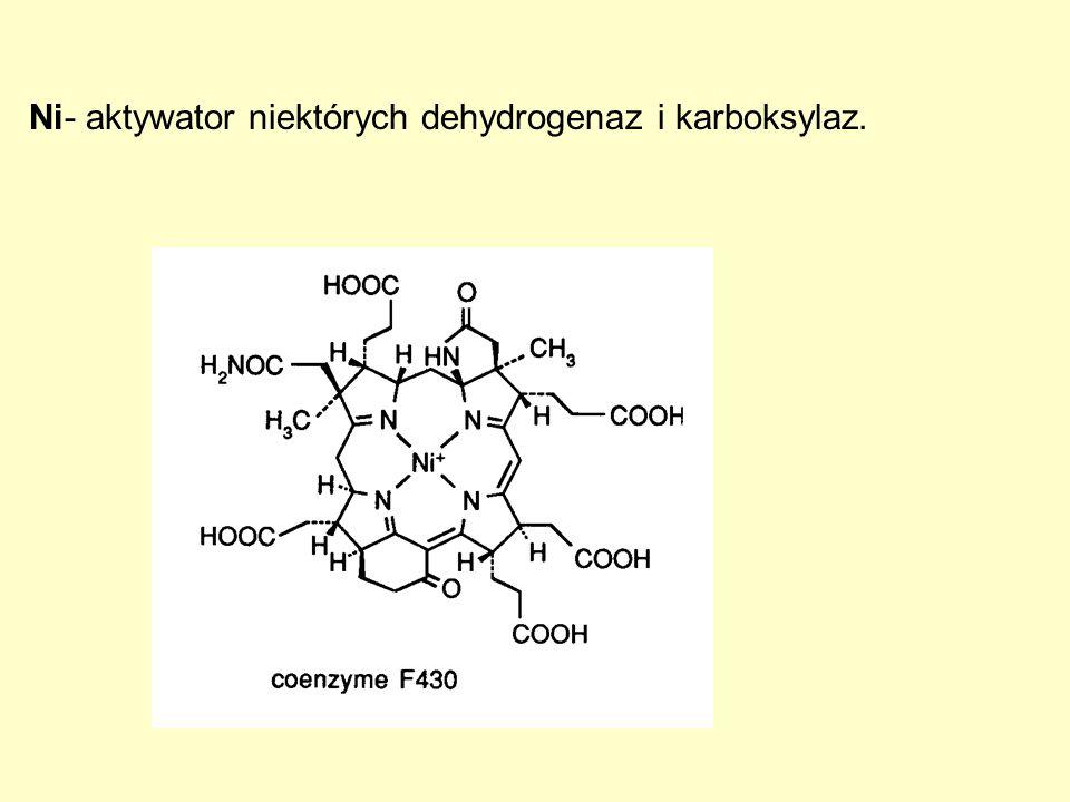 Ni- aktywator niektórych dehydrogenaz i karboksylaz.