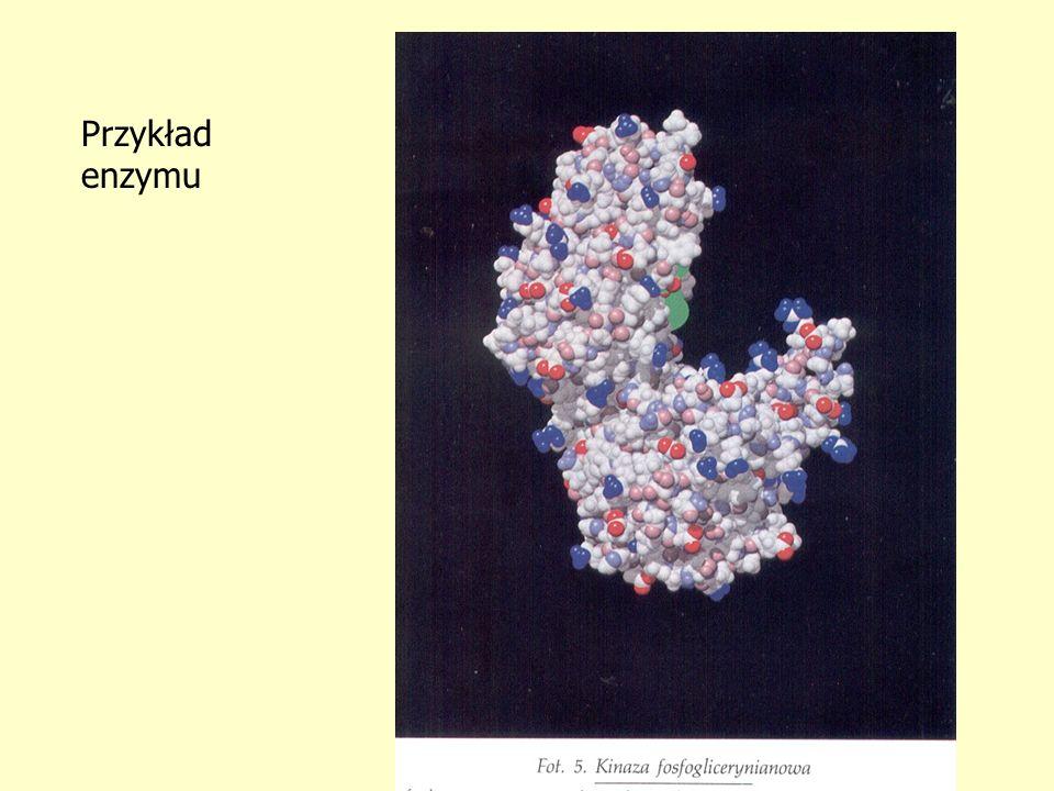 Przykład enzymu