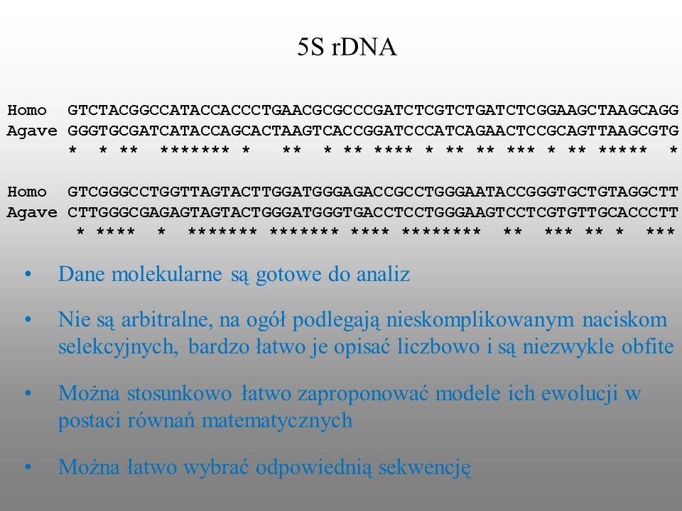 5S rDNA Homo GTCTACGGCCATACCACCCTGAACGCGCCCGATCTCGTCTGATCTCGGAAGCTAAGCAGG Agave GGGTGCGATCATACCAGCACTAAGTCACCGGATCCCATCAGAACTCCGCAGTTAAGCGTG * * ** **