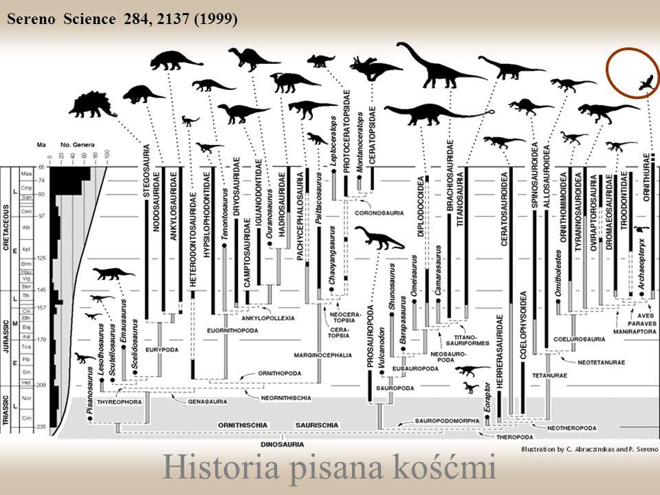 Historia pisana kośćmi Sereno Science 284, 2137 (1999)