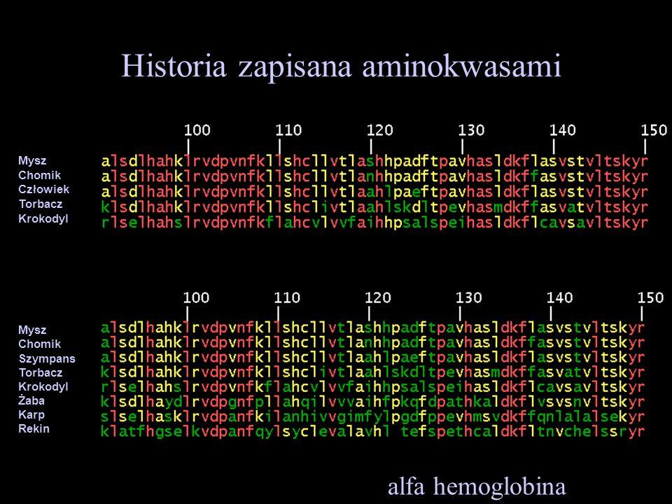 Historia zapisana aminokwasami alfa hemoglobina Mysz Chomik Człowiek Torbacz Krokodyl Mysz Chomik Szympans Torbacz Krokodyl Żaba Karp Rekin