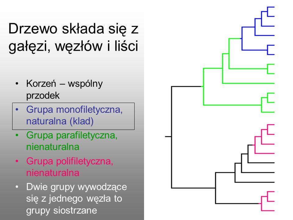 Korzeń – wspólny przodek Grupa monofiletyczna, naturalna (klad) Grupa parafiletyczna, nienaturalna Grupa polifiletyczna, nienaturalna Dwie grupy wywod