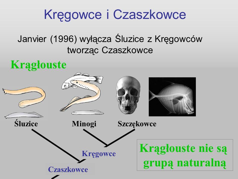 Kręgowce i Czaszkowce Janvier (1996) wyłącza Śluzice z Kręgowców tworząc Czaszkowce Czaszkowce Kręgowce Krągłouste Śluzice Minogi Szczękowce Krągłoust