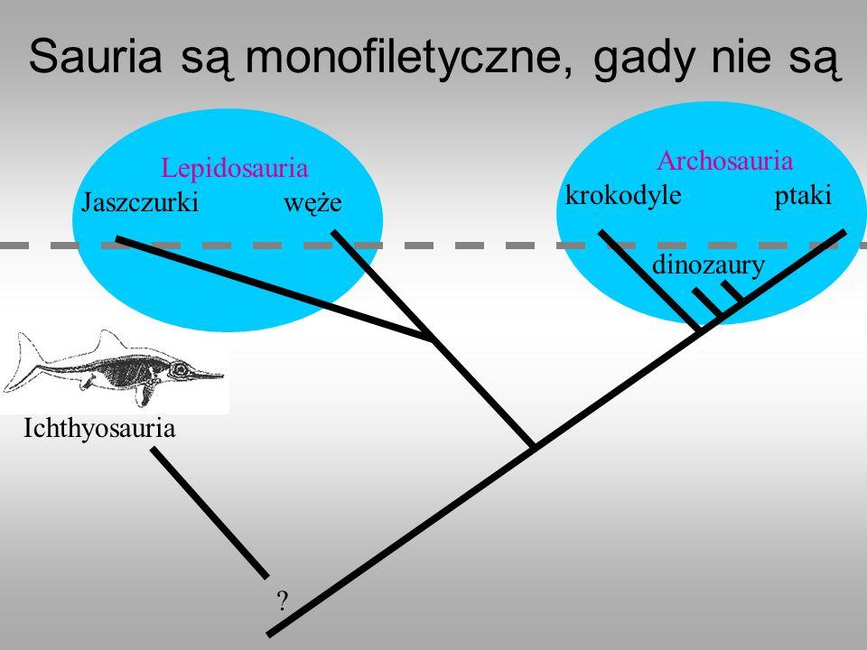 Ichthyosauria Sauria są monofiletyczne, gady nie są ? Lepidosauria Jaszczurki węże Archosauria krokodyle ptaki dinozaury
