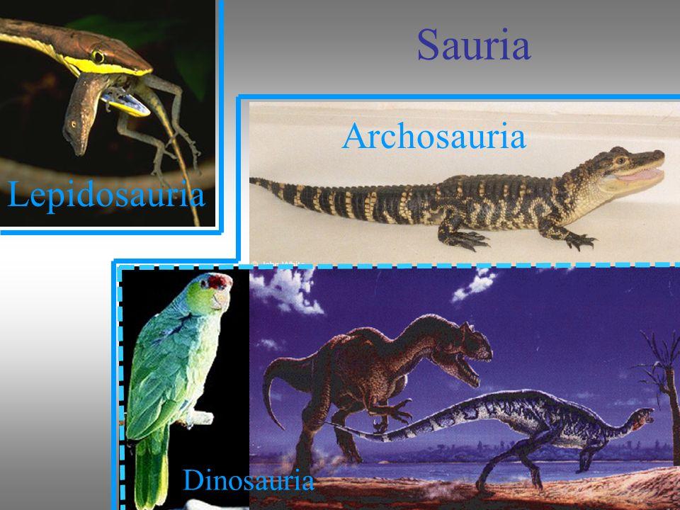 Sauria Archosauria Lepidosauria Dinosauria