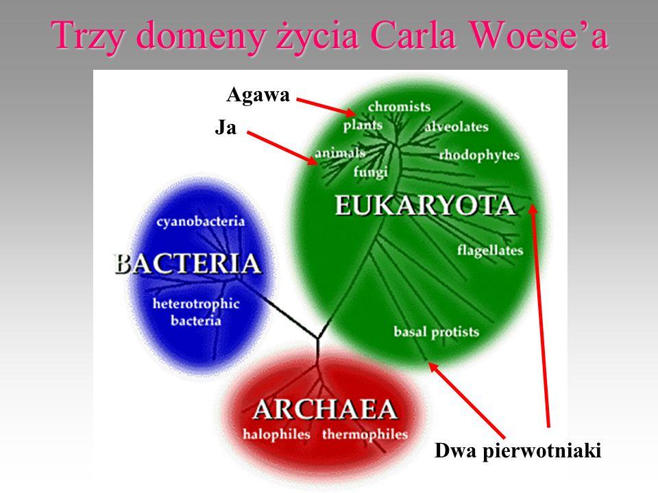 Trzy domeny życia Carla Woesea Ja Agawa Dwa pierwotniaki